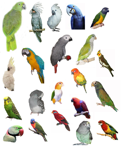The Antics Of Earl Gray My Exotic Pet Bird Identiy Your Pet Bird
