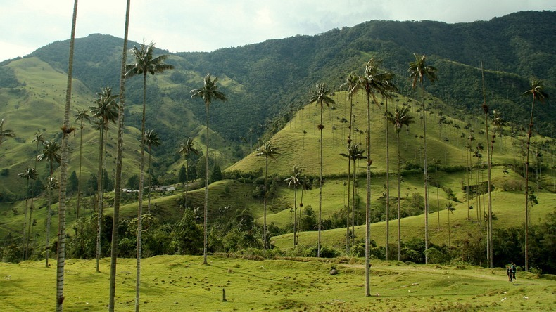 cocora-valley-5