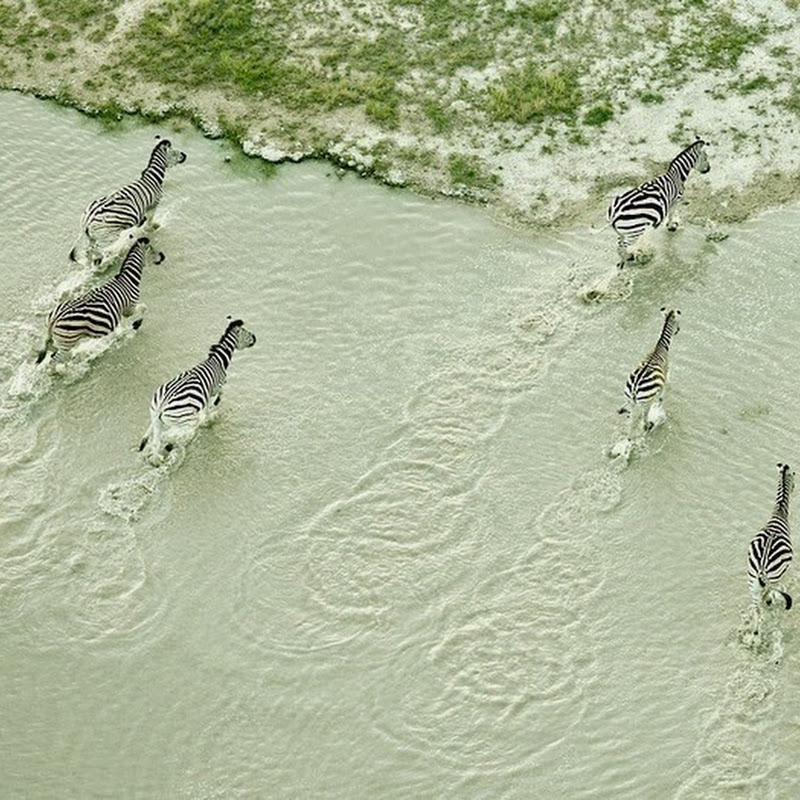 Aerial Photos of Botswana Wildlife by Zack Seckler
