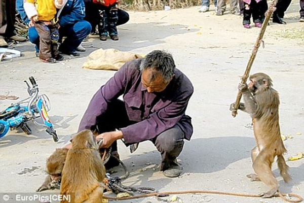 Monkey hitting man