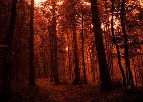 Germany-taunus-forest