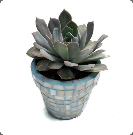 july-5-product-shots-035 southeast succulents dot com