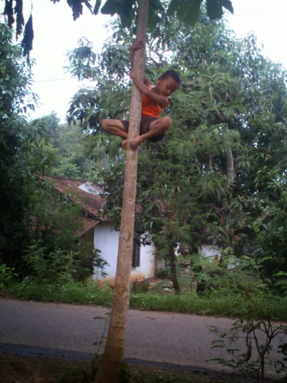 Al Zahra Blog Anak Kecil Memanjat Pohon