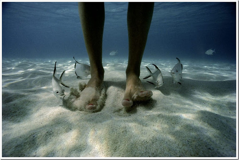 david-doubilet-pompano-fish-feet-US-virgin-islands