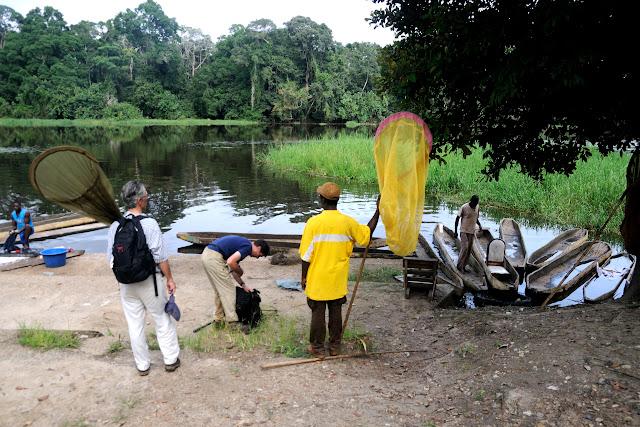Départ pour la prospection. Ebogo (Cameroun), 23 avril 2013. Photo : Daniel Milan