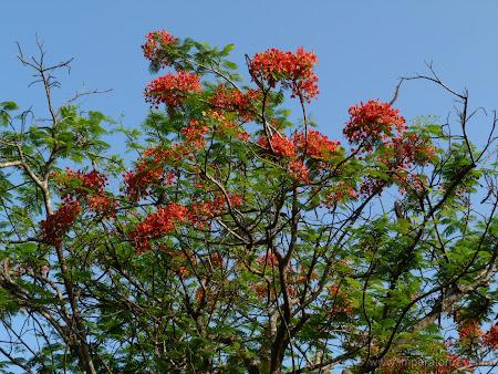 18. copaci tropicali.JPG