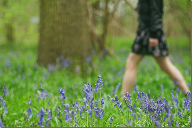 walking through bluebells