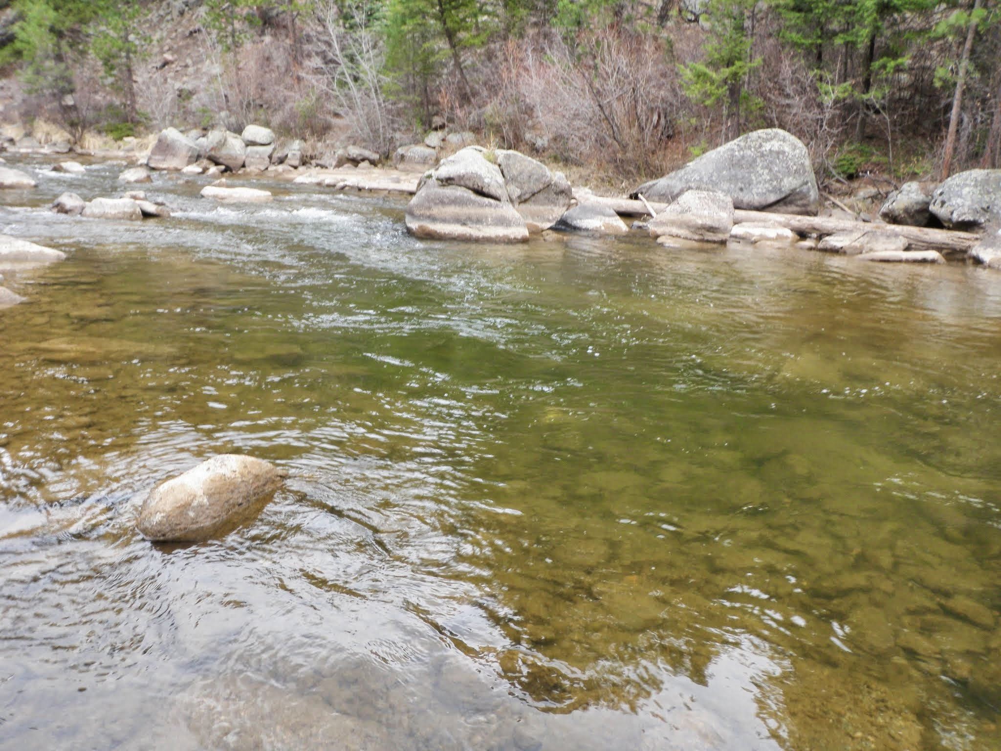 South boulder creek 04 01 2015 dave weller 39 s fly for Boulder creek fishing