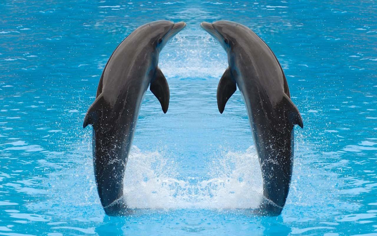 Dolphin Wallpaper Android Apps on Google Play