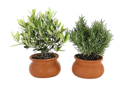 s-2-tuscan-herb-pots