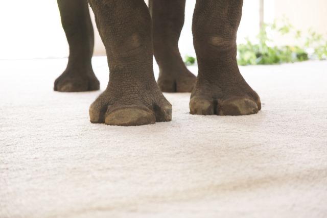 elephant-on-smartstrand