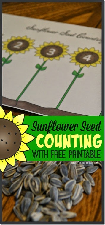 Sunflower Seed Counting Activity for Toddler and Preschool with FREE printable