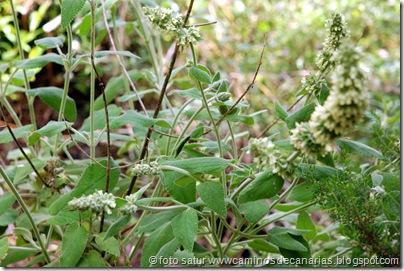 794 Bº del Laurel(Salvia de los Tilos)