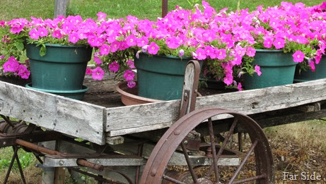 Wagon full of Rose Wave Petunias