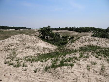 24. Dune nisip Letea.JPG