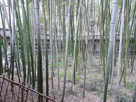 20.Obiective turistice Zhenjiang: Gradina bambus