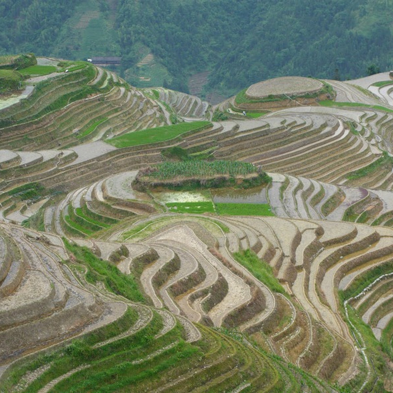Beautiful Pictures of Rice Terraces