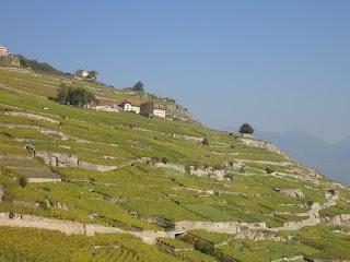 Vignoble en terrasses dans le Lavaux avec le Lac Léman
