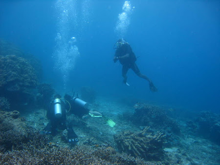Iunia Pasca: Diving in Oceanul Indian