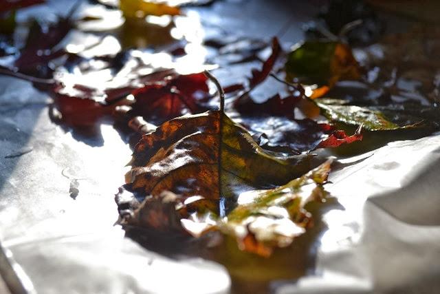 wax leaves 3-1