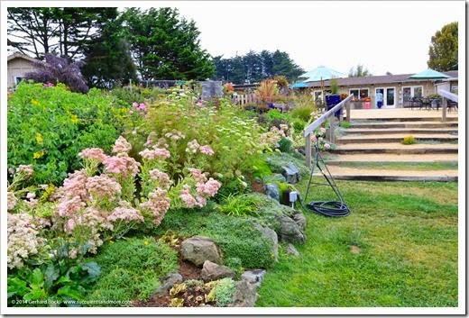 Succulents And More Mendocino Coast Botanical Gardens Part 2
