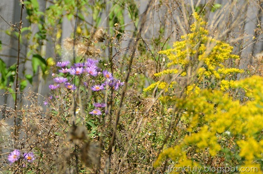 fall wildflowers