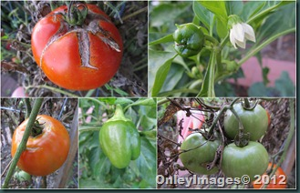 peppers-tomatoes