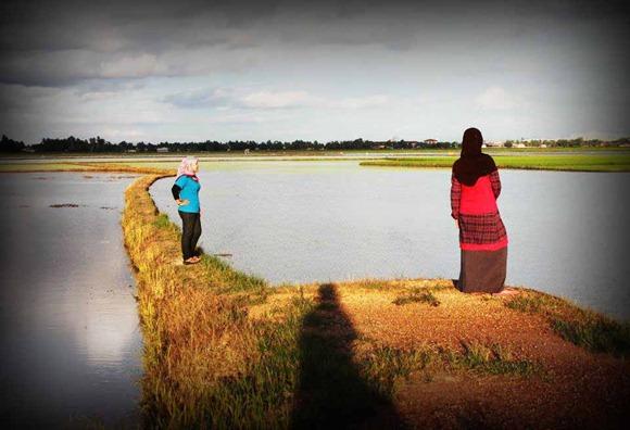 perempuan bertudung di sawah padi