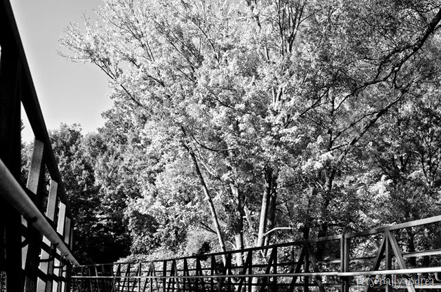 meadowvale black and white_006
