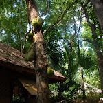 Тайланд 18.05.2012 6-46-55.JPG