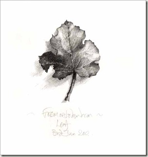 fremontodendron leaf bg