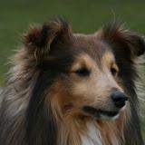 Fabi's 4 års fødselsdag fejret med hundevennerne