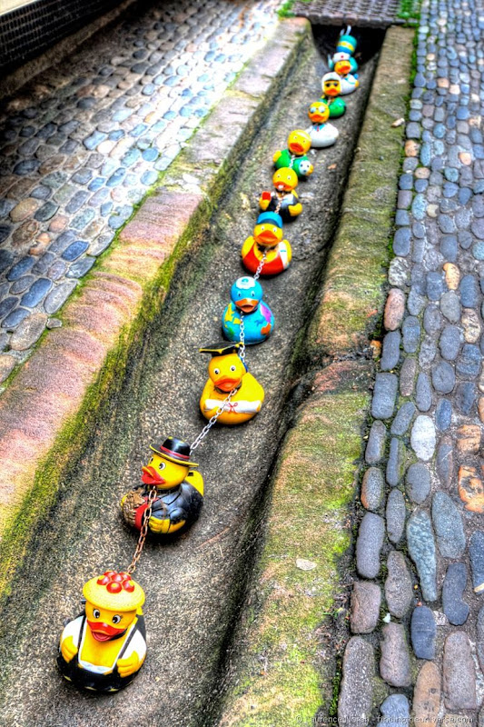 Ducks in Freiburg