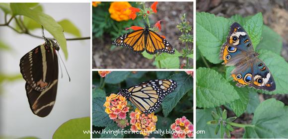 Buttefly garden fieldtrip