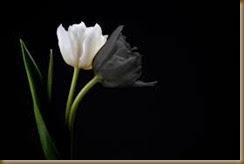 flor negra y flor blanca
