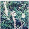 White dune wild flower...