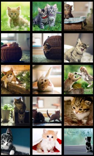 Cute Kitten HD Wallpaper