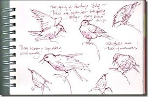 sketches 1 bg