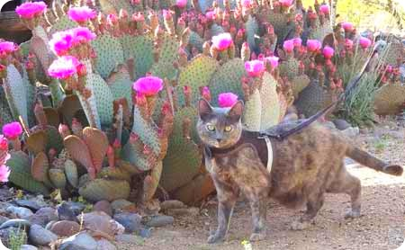 bella-and-cactus