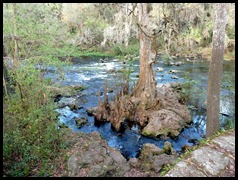 04 - River Rapids Trail - Cypress Knees