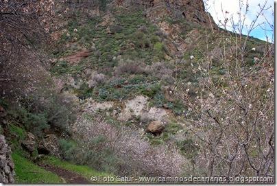 7524 La Goleta-Tejeda(Barranco de la Peña)