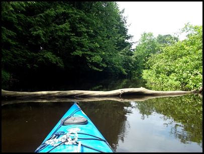 Kayaking the Exeter River 016