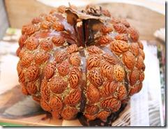 country living fair peach pit pumpkin2