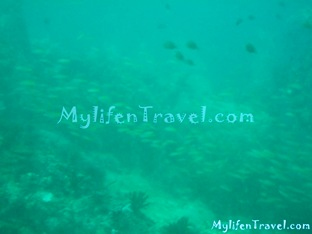 Koh Lipe Diving 70