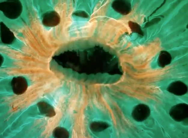 mejores videos microscopio