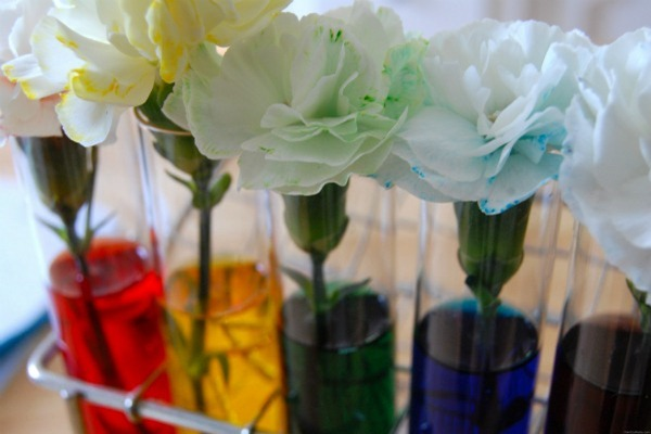 Food Coloring Carnations Tutorial