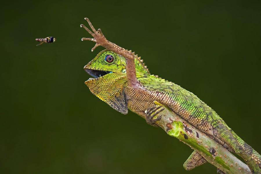 Come Here U Little Creature..!! by Aditya Permana - Animals Reptiles