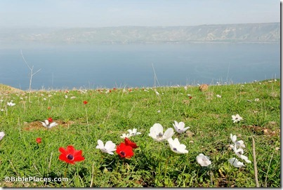 Sea of Galilee from west, tb022107099
