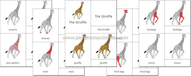 Africa Continent Giraffe Nomenclature Cards