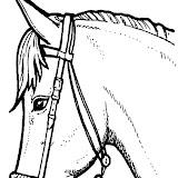 caballo-06.jpg